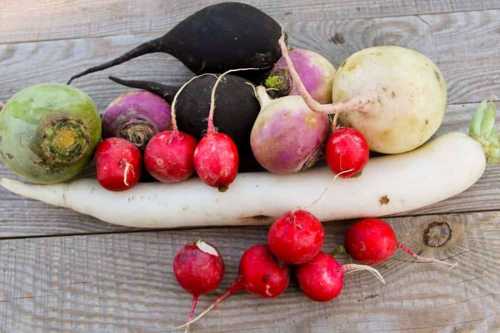can you freeze radishes